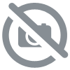 Megacephala regalis katangana couple